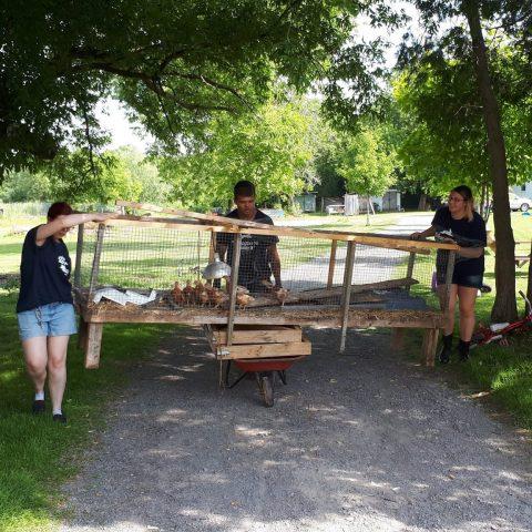 chicken coop relocation