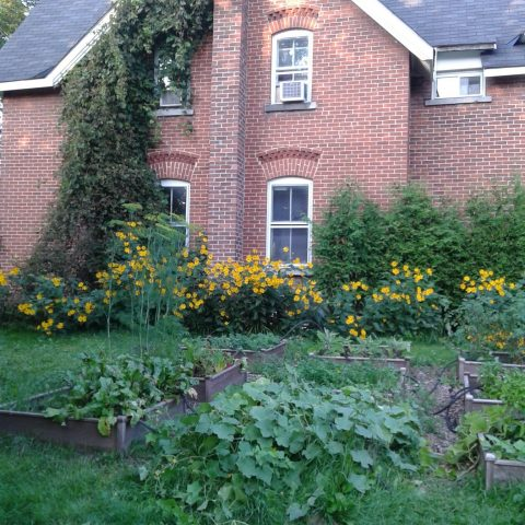 Farmhouse & vegetable garden